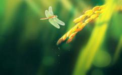 《做一只飞舞的蜻蜓》少儿睡前故事365天,儿童小故事